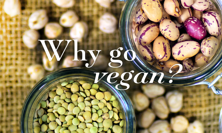 Why Go Vegan Sussex Vegan Blog